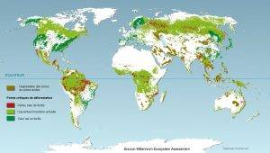 carte deforestation